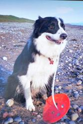 Barney with his find on Silecroft beach, Cumbria.