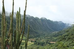 The forests in the Bolivian Andes contain stunning biodiversity but are becoming fragmented due to small-scale farming. : Patrick Bottazzi, Author provided