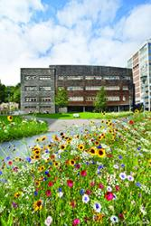 The area in front of the Environment Centre Wales building is sown with wild flowers.: copyright Iwan Williams.
