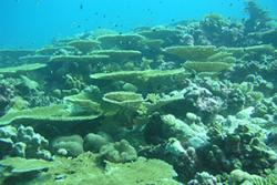 Some of the Reefs off the Chagos Islands.