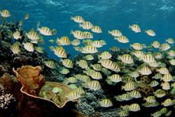 A healthy coral reef.: Image credit & Copyright: Brian Zgliczynski