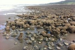 A honeycomb reef at Llanddulas Beach, Conwy County, the focus of  the research at the School of Ocean Sciences.