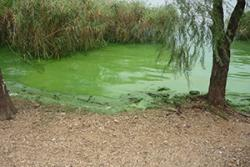 Example of extreme eutrophication (algal blooms) in China (Lake Taihu, Jiangsu)