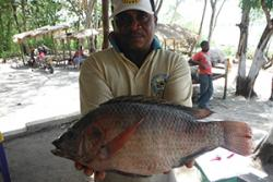 Tasty tilapia freshly caught from the Ruvu River in Tanzania, but this globally-cultured Nile Tilapia strain has been introduced from Uganda and is threatening unique native tilapia species.