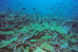 A healthy deep coral reef: John Turner