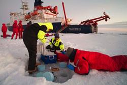 The Bangor team sampling Antarctic pack ice for micro-gels : Image copyright: David N. Thomas.