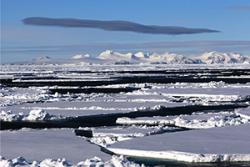 Antarctic and Arctic pack ice are not frozen deserts devoid of life.: Image copyright David N. Thomas