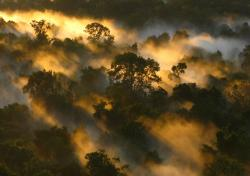 Amazon Forest canopy at Dawn Brazil : _Peter Vander Sleen