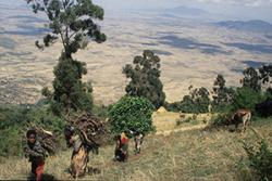 Wood collecting at the margins of an Ethiopian forest.