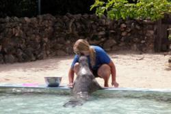Kate feeding and training the seals at the aquarium