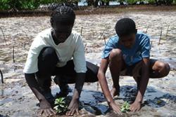 Planu mangrofau yn Kenya.
