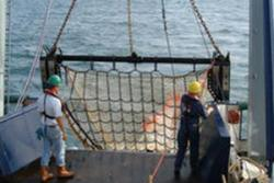 A beam trawl: image credit Michel Kaiser
