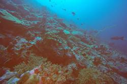 Healthier corals in deeper water
