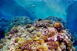 A healthy coral reef on Millennium Atoll, Southern Line Islands.: Image credit: Brian Zgliczynski,