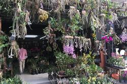 An orchid market in China showing the great variety of colourful flowers for sale.
