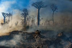 Our Planet's team filmed the burning of Madagascar's dry forests, but this didn't make the final cut. : Image: Jeff Wilson/Silverback/Netflix