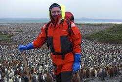 Dr Phil Trathan in South Georgia counting king penguins, another aspect of his work.