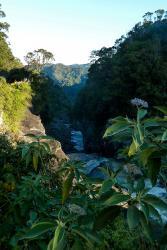 Ranomafana National Park: CC BY-SA 3.0