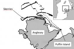 Map showing recorded movements of tagged razorbills.