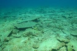 The future? A lifeless reef ruin.