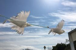 Artist Jane Evans worked with pupils at Ysgol David Hughes to create these seagulls.