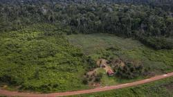 A drone image of secondary forest.: Image credit and copyright Marizilda Cruppe