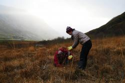 Tree planting in the Ogwen Valley