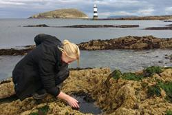 Investigating rock pools at Penmon Point.