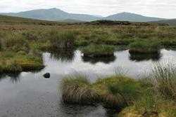 A typical upland wetland.: Inage credit: Mark Cooper.