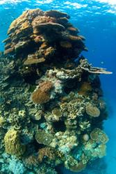 Coral reefs are the world's most biodiverse marine ecosystems :  Image credit: Jerker Tamelander