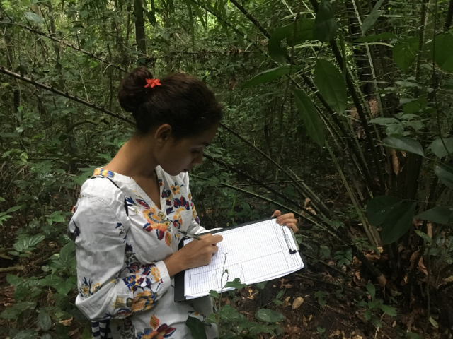 Data collection as part of the student-led research project on the Tropical Forestry Study Tour.  This group were investigating the effects of different silvicultural treatments on forest stand structure and carbon stocks. © James Walmsley