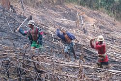 Clearing the forest for agriculture has short term benefits to the farmer: Photo credit: Neal Hockley
