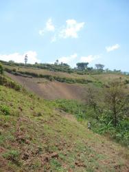 Farming on steep slopes in Namabya Sub-county, Manafwa District of Eastern Uganda. Photograph taken by Genevieve Lamond, February 2014.