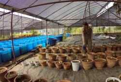 Watering: Tree seedlings at the plant nursery
